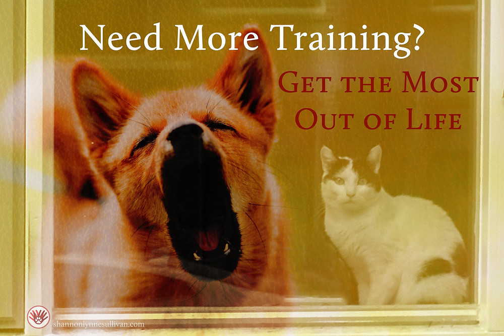 A dog barks at a startled cat sitting in a window. Text: Need More Training? Get the Most Out of Life shannonlynnesullivan.com