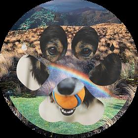 DOGS4_lighten.png
