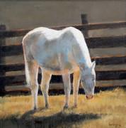 """Haloed Horse"""