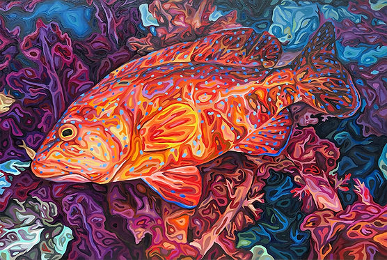 For web. - Coral Grouper, oil on wood, 24 x 36 in, 61 x 91.4 cm.jpg