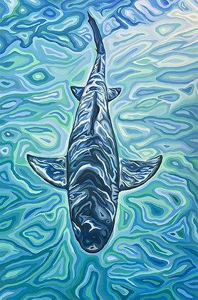 """Lemon Shark, 36"""" x 24"""""""