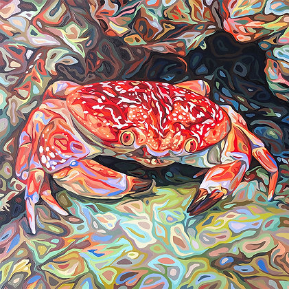 """Batwing Coral Crab, 12"""" x 12"""" poster"""
