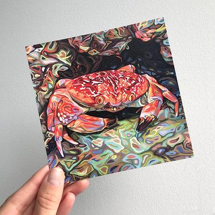 "Batwing Coral Crab, 4"" x 4"" postcard"