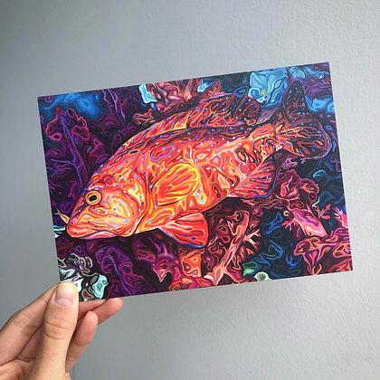 "Coral Grouper, 5"" x 7"" postcard"