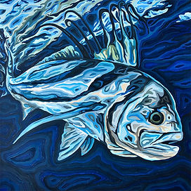 For web - Roosterfish, oil on wood, 20x20 in, 50.8 x 50.8 cm.jpg