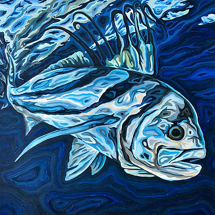"""Roosterfish, 20"""" x 20"""""""