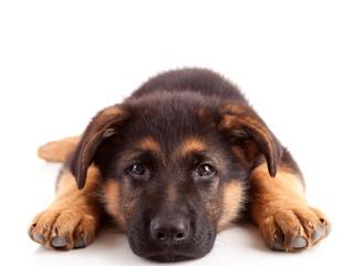 Seguros para perros, gatos y caballos