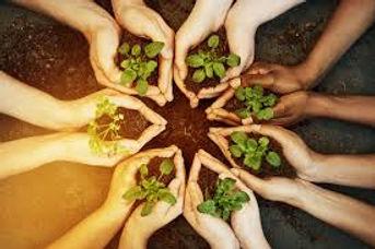 hands plants.jpg