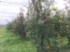 thumb_IMG_7407_1024.jpg