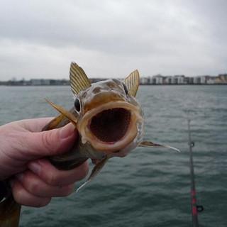 Fisketur 2012 (11).JPG