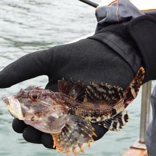 Fisketur 2012 (4).JPG