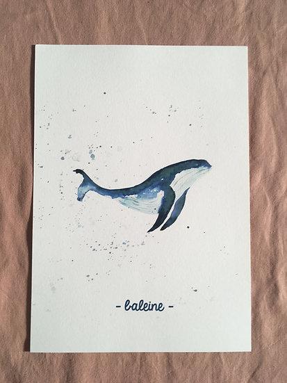 AFFICHE - Baleine