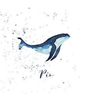 Faire-Part Pio - baleine aquarelle- feui