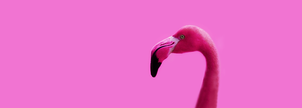 flamingo-Smile-longNeck.png