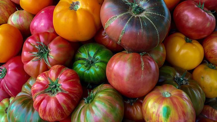 Tomatoes, Glorious Tomatoes!