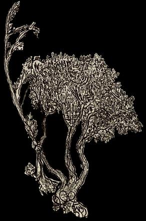 樹YY.png
