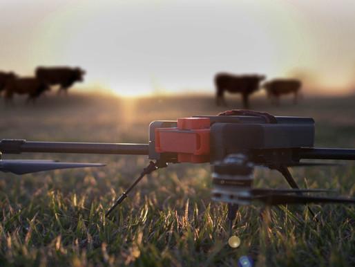 Pecuária de Precisão: O manejo inteligente e de alta produtividade com o uso de drone