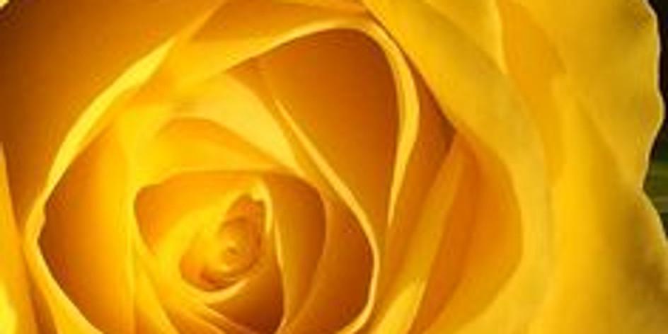 Онлайн трансляция  «Как прекрасен желтый цвет»