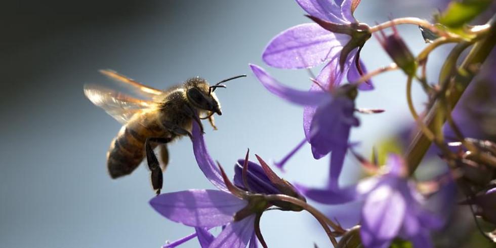 Онлайн трансляция   «Экономика VS Экология»  «Всемирный день пчёл»