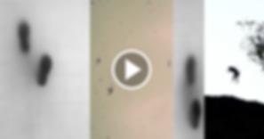 Captura de pantalla 2018-09-30 a la(s) 2