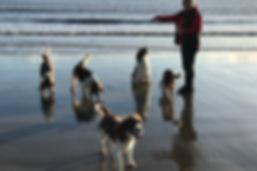 Zoe Phillips dog trainer