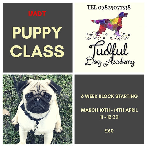 Puppy Class space 5