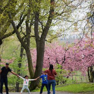 How Central Park Could Fix Public Education