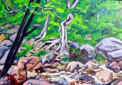 shallow stream deep wood