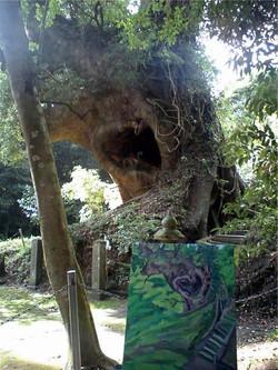 Koyama Tree Kagoshima