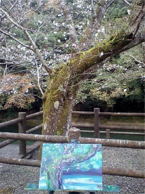 Aira Cherry Tree Kagoshima