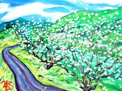 Nejime Plum Trees 2010