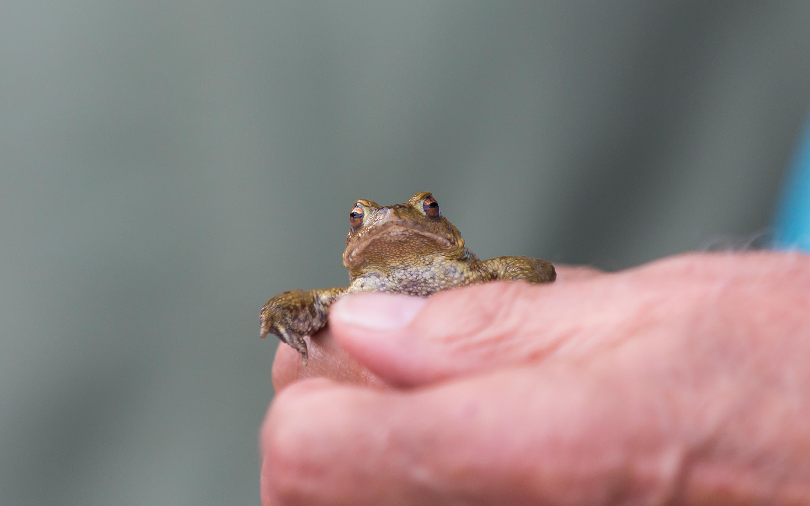 Frog Pride