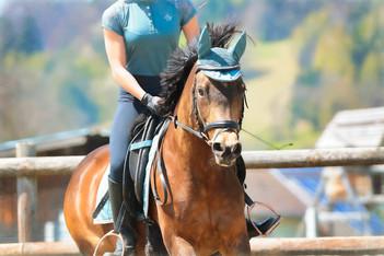 horseback-riding-6281534_1920.jpeg