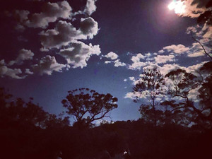 Wilderness Full Moon Hike