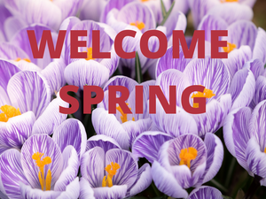 🌸Welcome Spring Equinox🌸