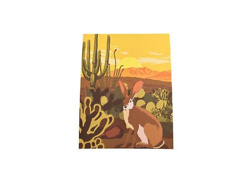 Print   Southwest Jackrabbit   Tucson Desert