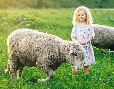Sheep and Young Girl