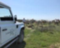 Découverte d'un élevage de chevaux Camargue, rencontre avec un éleveur