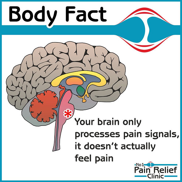 Brain body fact - pain.