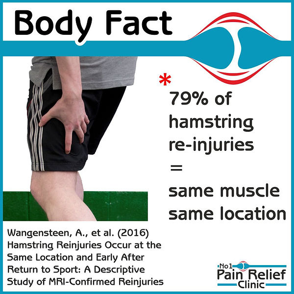 Body Fact about hamstrings
