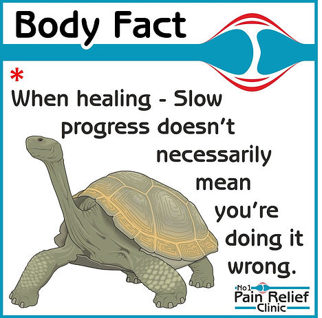 Body fact: slow healing is healthy