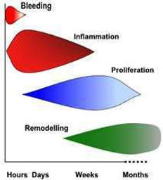 Tissue Healing Phases