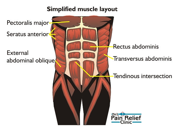 Simplified muscle layout