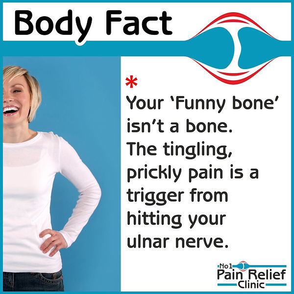 Body fact about funny bone