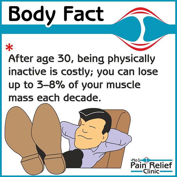 Body Fact about muscle mass