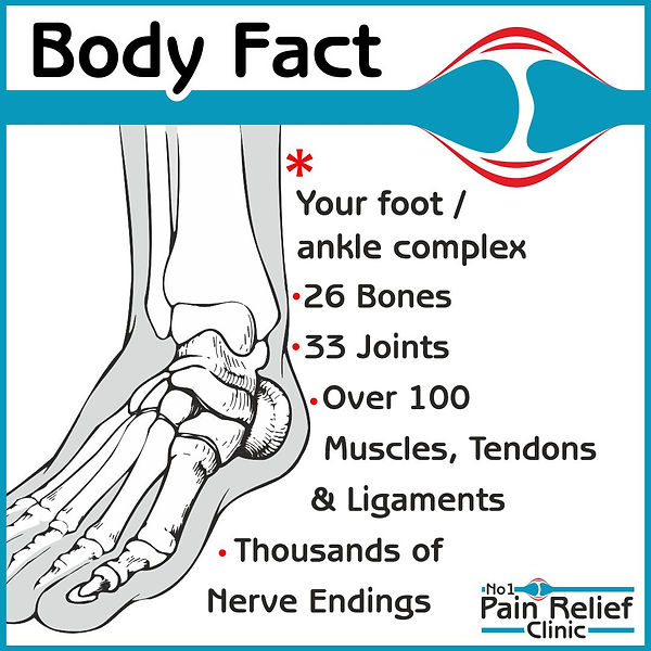 Body fact about feet