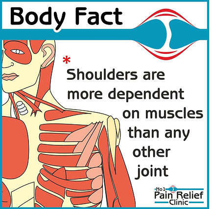Body fact about shoulder