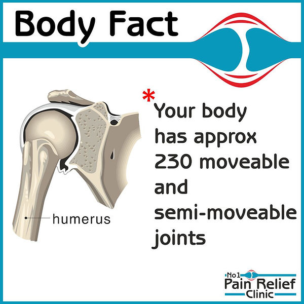 Your body has approximately 230 moveable and semi-moveable joints