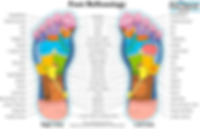 Reflexology chart of the sole of the foot