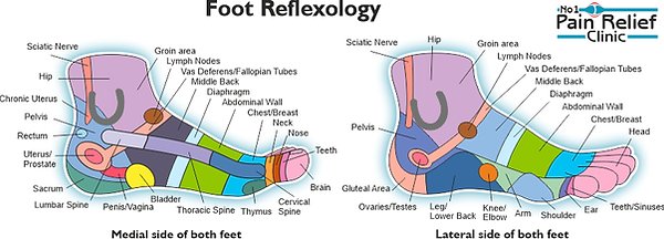Reflexology Chart side.png